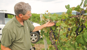 Keuka Lake wineries expect decreases