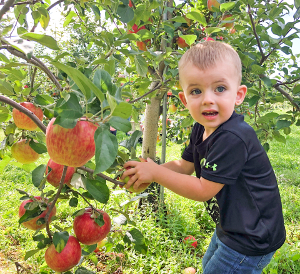 Apple crop is sweeter than usual