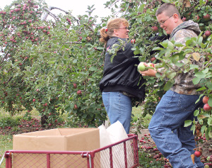 Local apple growers expect excellent season
