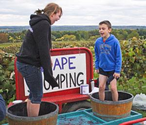 PHOTO GALLERY: It's harvest time at the wineries